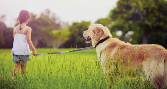 La desparasitación y vacunación de tu mascota