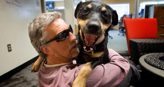 Terapia asistida por animales