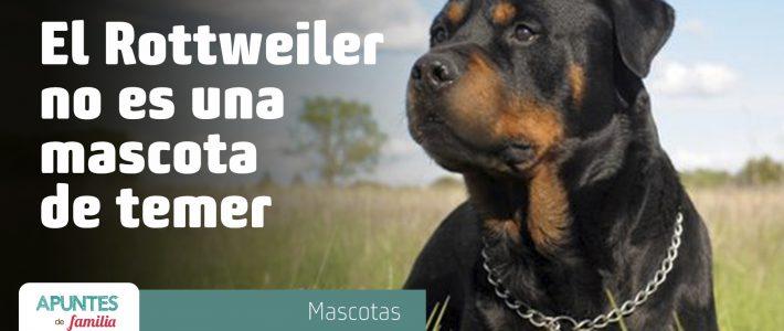 """""""El Rottweiler""""  no es una mascota de temer"""