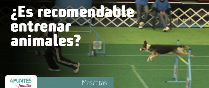 ¿Es recomendable entrenar animales?